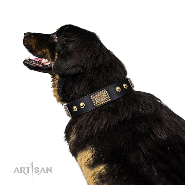 Tibetian Mastiff easy wearing dog collar of awesome quality genuine leather
