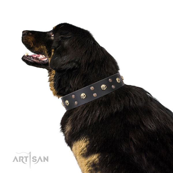 Tibetian Mastiff handmade natural genuine leather dog collar with embellishments