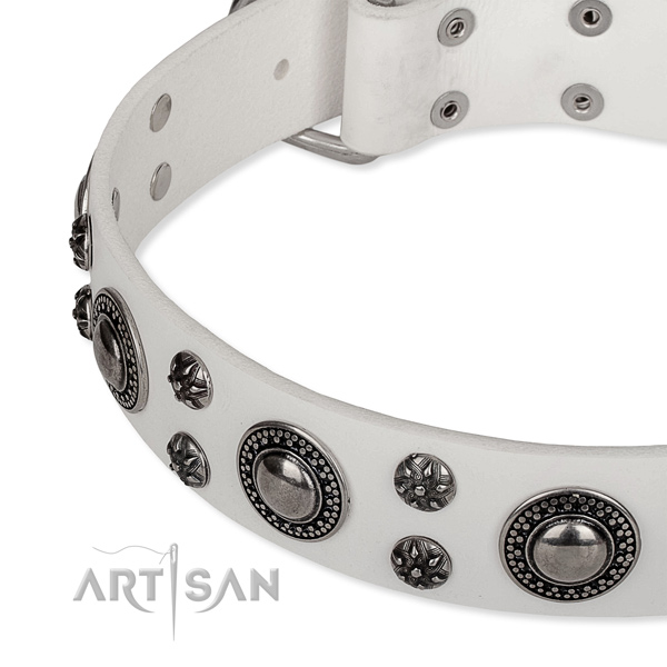 White leather dog collar decorated with round studs