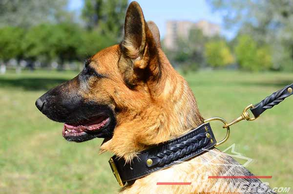Braided German Shepherd Leather Collar From Direct Maker
