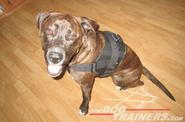 Easy adjustable Pitbull harness with quick release buckle
