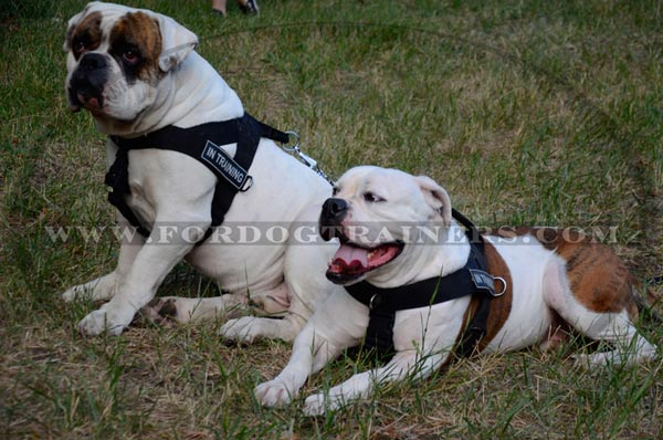 Nylon dog harness all-purpose for American Bulldog Breed