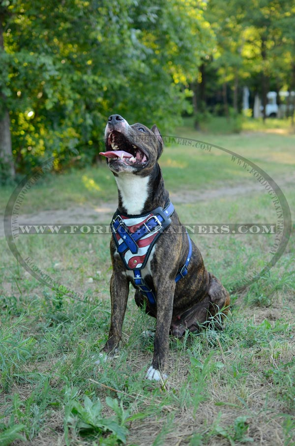 Training Amstaff Harness with USA Flag Image