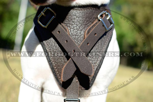 Brown Leather Chestplate of Training Dog Harness