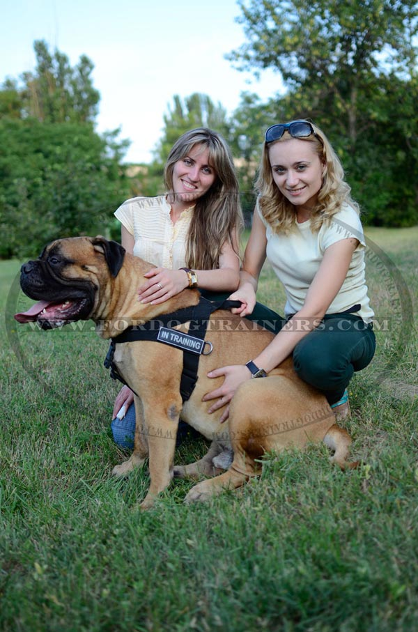 Nylon Bullmastiff Harness with patches