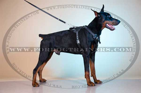 Leather Dog Harness for Doberman breed