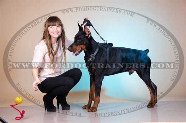 Leather Dog Harness for Doberman training and walking