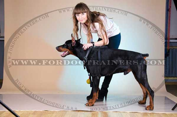 Basic Training Leather Dog Harness for Doberman