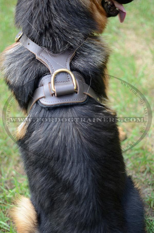 Brass D-Ring on Durable German Shepherd Harness Leather for Leash Attachment