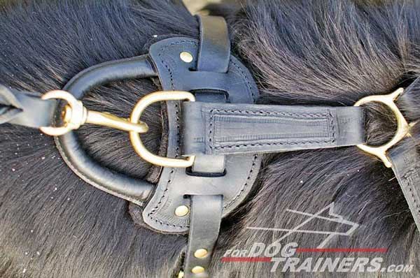 Rust proof brass hardware for leather Newfoundland harness