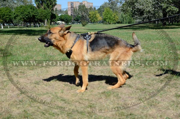 Leather Padded German Shepherd Harness Training Dog Gear