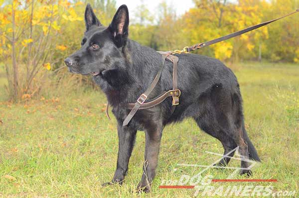 Reliable Pulling German Shepherd Harness Leather