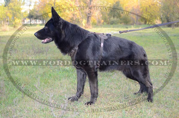 Training German Shepherd Harness Leather with Handle