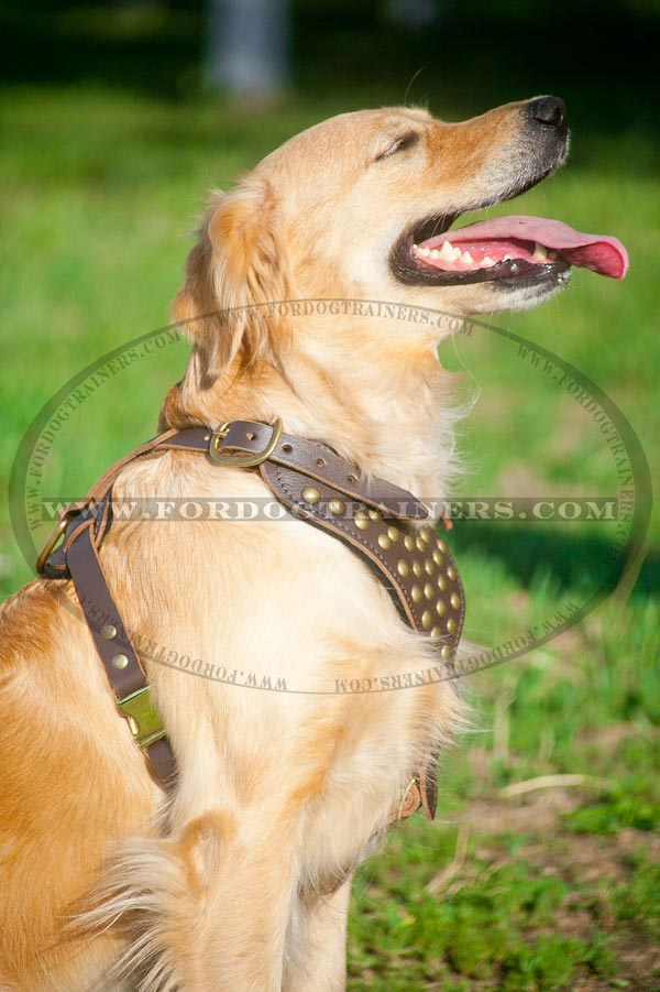 Daily Walking Leather Harness for Large Dogs