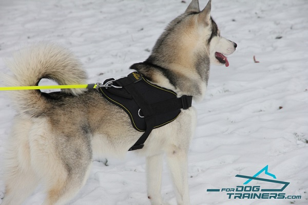 Husky Pulling Harness of Practical Nylon Material