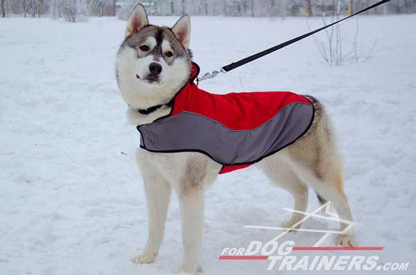 Warming coat for Huskies