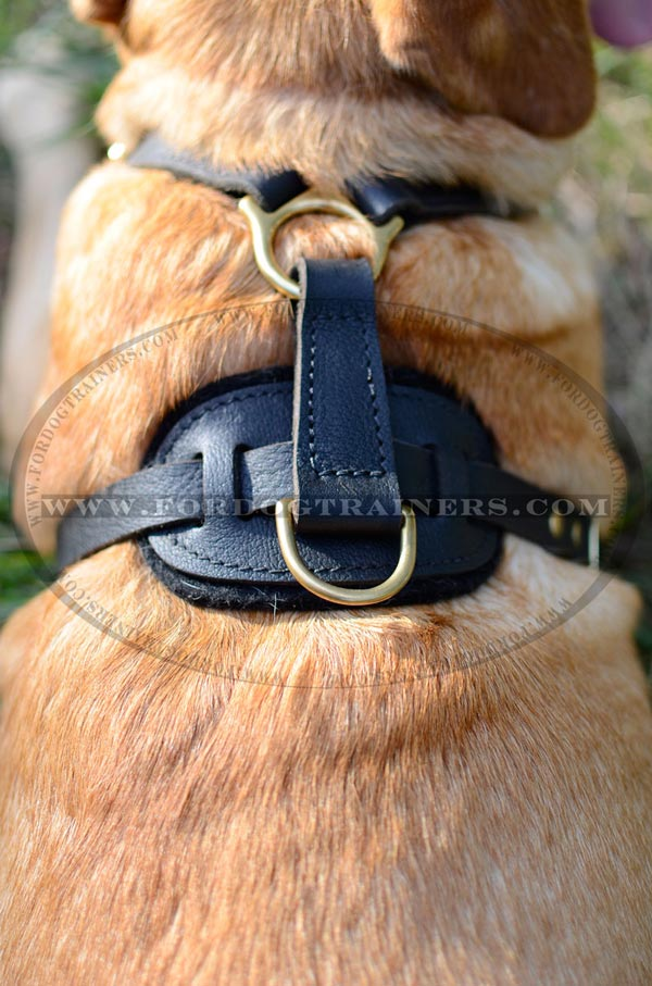 Brass D-ring for leash attachment for leather Labrador harness