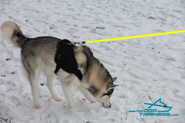 Any Weather Nylon Husky Harness with O-ring for Leash