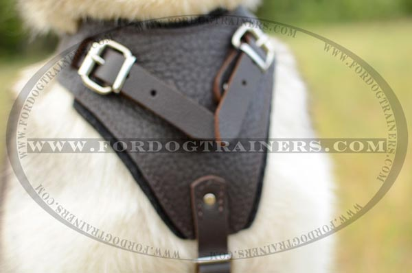 Wide Chest Plate of Leather Siberian Husky Harness