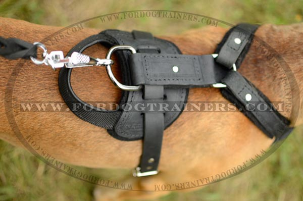 Top D-ring for leash attachment
