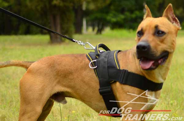 Strong nylon Pitbull harness for pulling