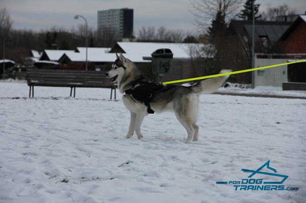 Pulling and Tracking Nylon Harness for Husky Daily Walking