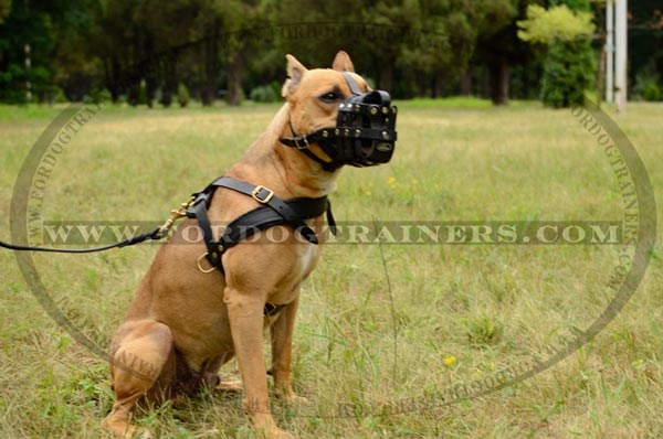 Corrosion resistant brass fittings for leather Pitbull harness
