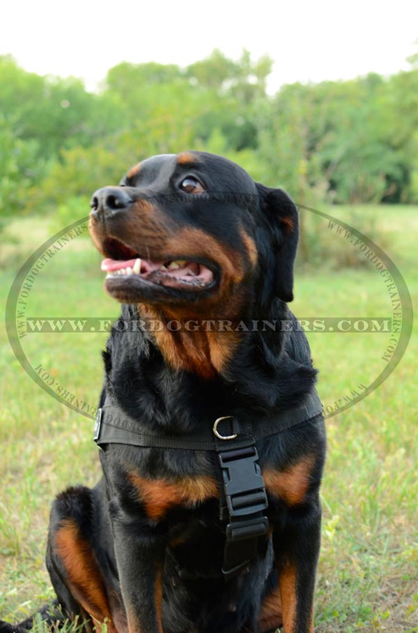 Nylon Dog Harness for SAR mission with id patches