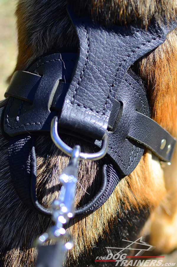 Nickel Plated D-Ring of German Shepherd Harness Leather