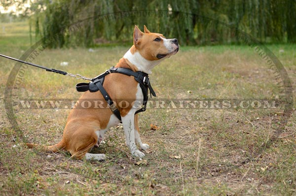 Adjustable Leather Staffordshire Terrier Harness Durable Straps