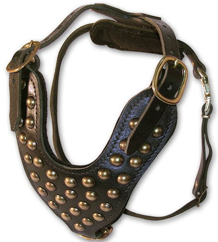 studded leather dog harness for English Bulldogs