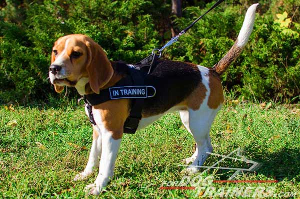 Waterproof Nylon Beagle Leash