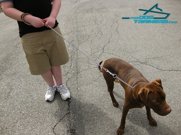 Amazing Dog Leash with Super Strong Hardware