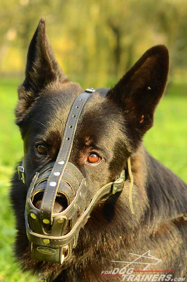 Breathable Royal German Shepherd Muzzle Padded Inside