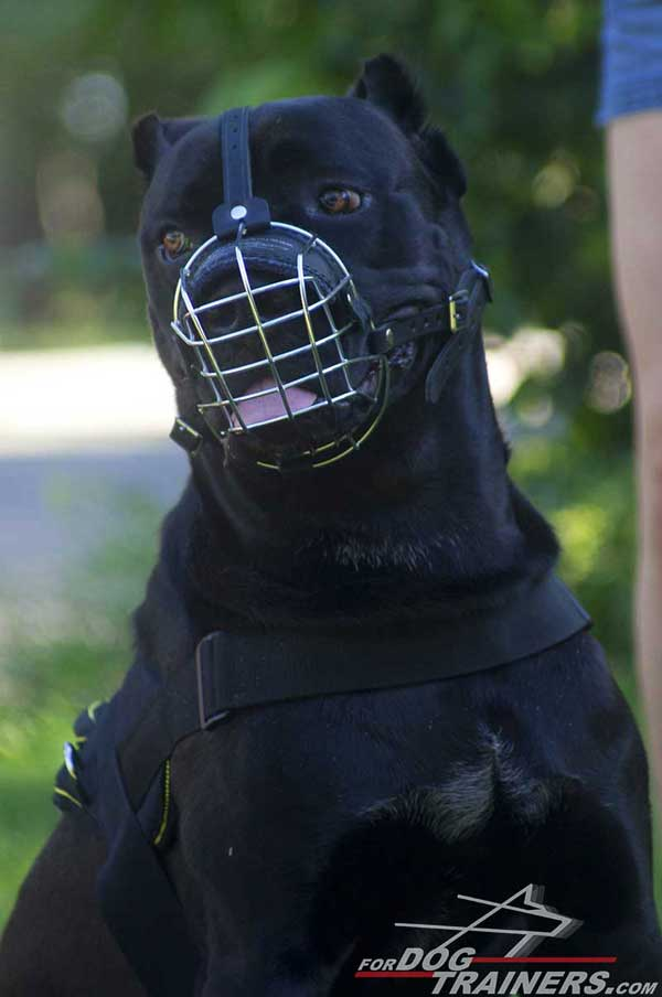 Wire Cage Cane Corso Dog Muzzle with Padded Nose Area