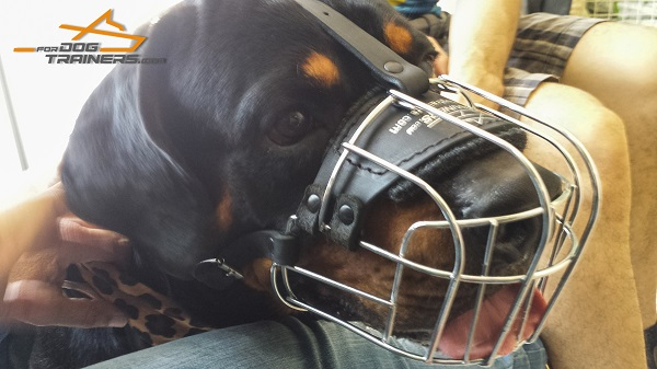 Easy Adjustable Wire Basket Muzzle for Rotty
