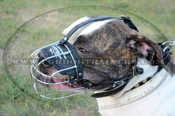 American Bulldog Muzzle for Training and walking