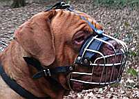 Dogue De Bordeaux Basket Wire Dog Muzzle - M4-Ray