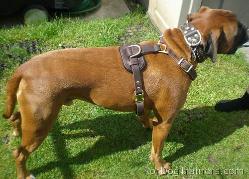 BOXER LEATHER LEAD WITH BRASS BOXER HEAD ON WITH PADDED HANDLE