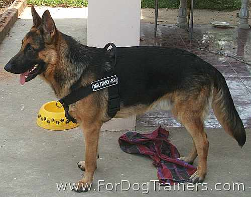 Buster German Shepherd wearing Better control everyday all weather dog harness - H17
