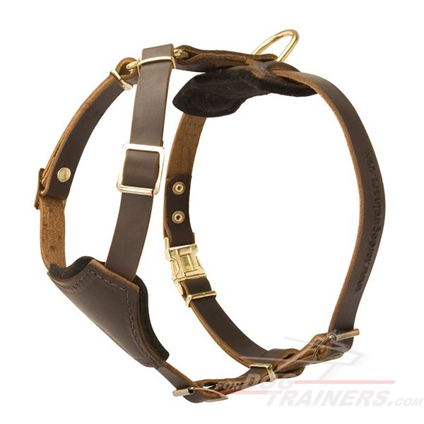 Leather Dog Harness for Walking and Training Your Puppy