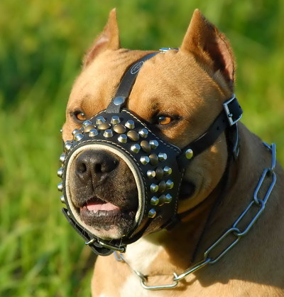 Loop-like Design Studded Leather Dog Muzzle for Pitbull Training and Walking