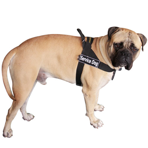 Better control everyday all weather dog harness for Bullmastiff - H17