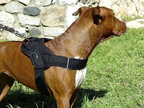 Waterproof Lightweight Nylon Pitbull Harness for Tracking, Pulling, Training, Walking