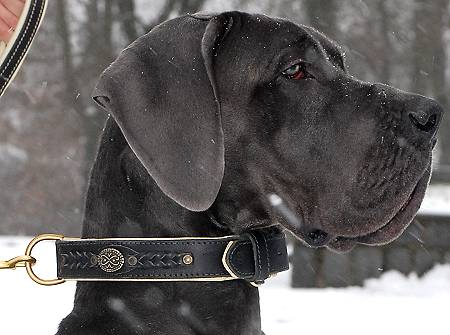 Royal Nappa Padded Handmade Leather Dog Collar