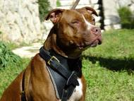 Classic Leather Dog Harness for Attack Training and Walking